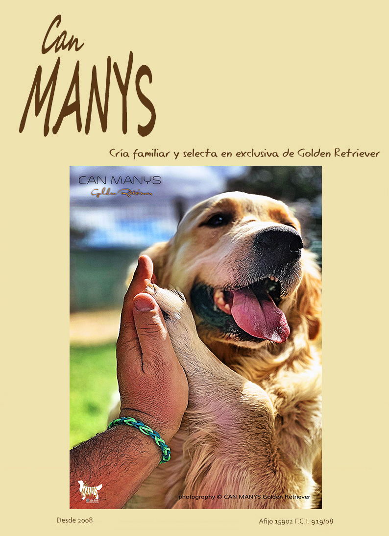 CAN MANYS Golden Retriever